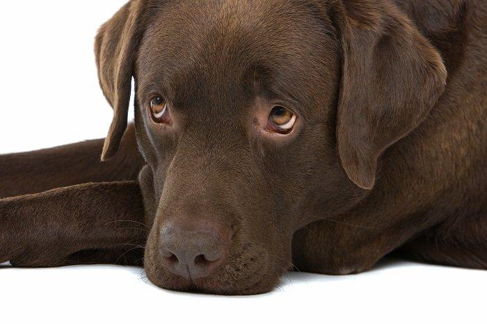 Cute Male Dog Names - Male Dog Names
