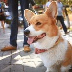 The perfect male dog names inspired by personality, history and mythology