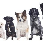 Choosing the Right Dog Name for Your Pet